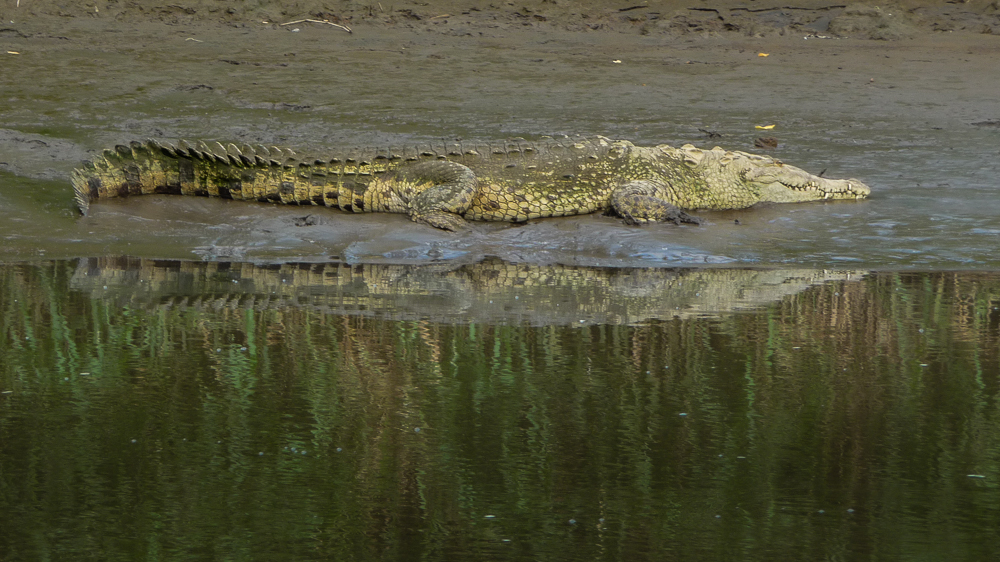 Another croc
